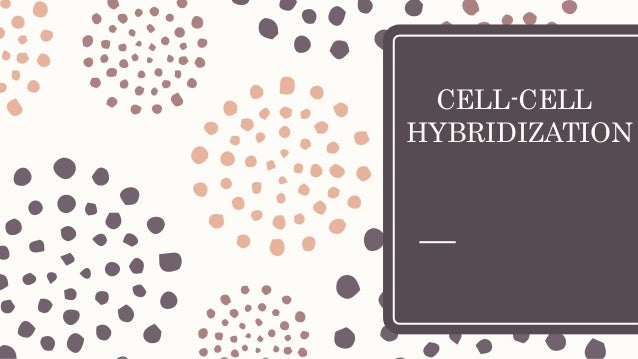 CELL-CELL HYBRIDIZATION