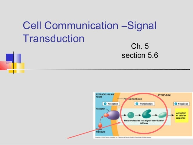 ap biology notes cellular communication This online classroom is designed to help you succeed in ap biology  unit 3:  cells & transport weeks 7-10 resource unit 4: cell communication   assignments a tour of the cell video notes (stamped assignment) are viruses  alive.