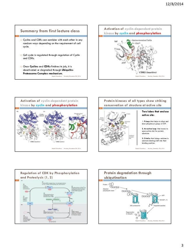 what is the active site and what is its job