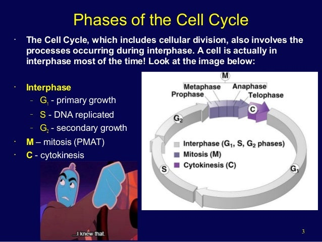 The Cell Cycle and Cancer