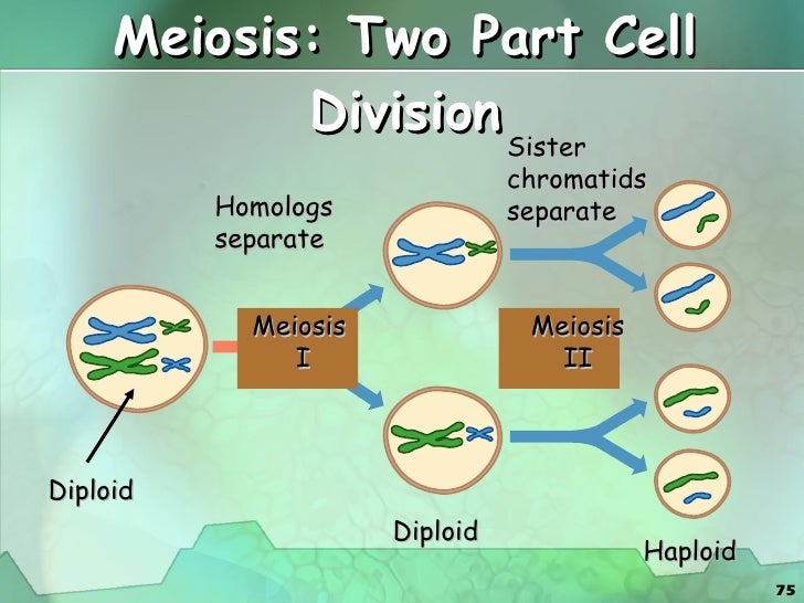 cell division essay Down syndrome essay example down syndrome cell division is of vital importance to our body the division of cells occurs in two ways, mitosis and meiosis.