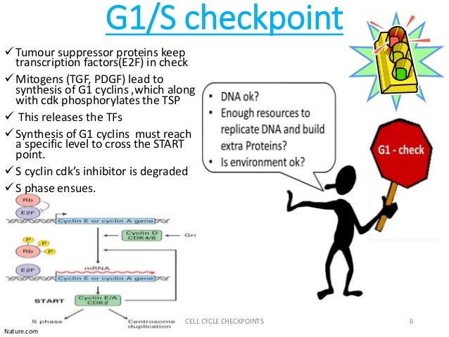 g1 checkpoint