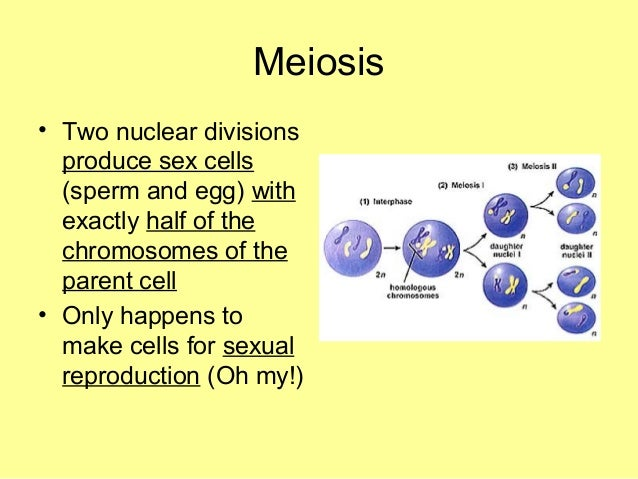 Why is meiosis important for sexual reproduction images 882