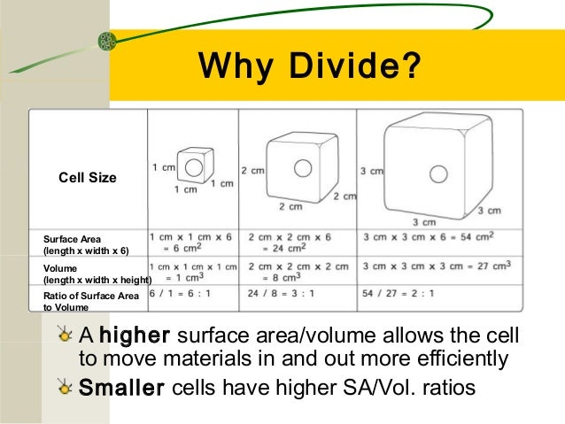 surface area and cell size By reducing cell size, cells are greatly increasing the surface area to volume ratio which makes diffusion/osmosis much more effective cellular concentrations of ions, nutrients, salts, etc can occur much more quickly and efficiently.