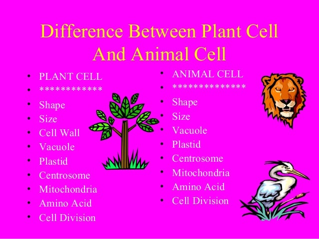 difference between plant and animals Now the key difference between plant and animal cell are- a plant cell has the cell wall which is made of cellulose whereas animal cell doesn't have cell wall another comparison can be made based on their shape a plant cell has fixed rectangular shape whereas animal cell has generally round and irregular shape.