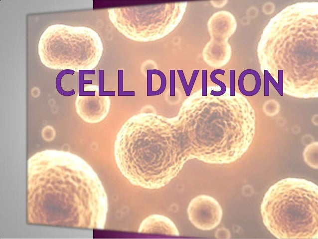  Theprocess by which a cell divides into two or more cells. Cell     division is also the source of tissue growth and re...