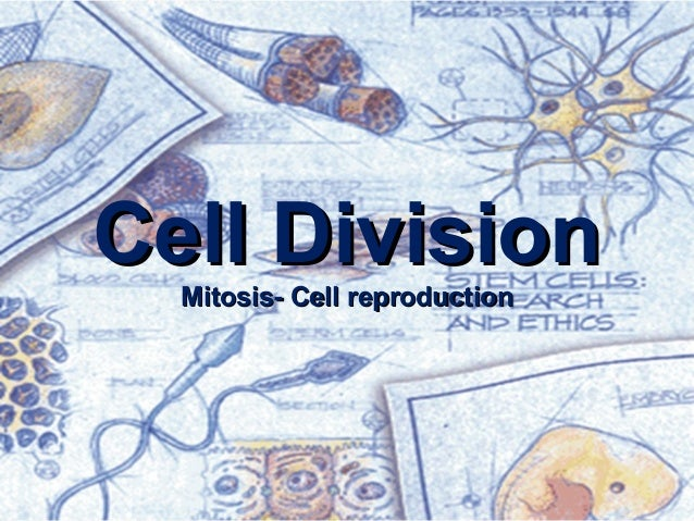 Cell Division Mitosis- Cell reproduction