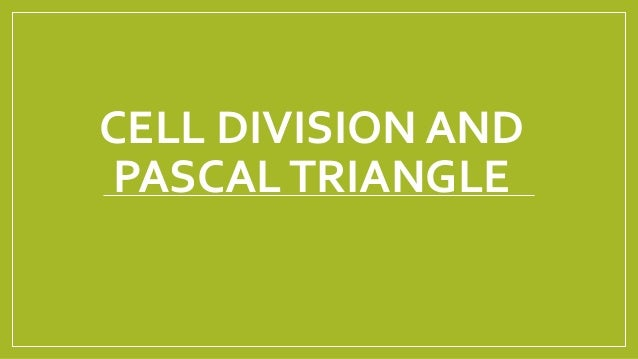 CELL DIVISION AND  PASCAL TRIANGLE