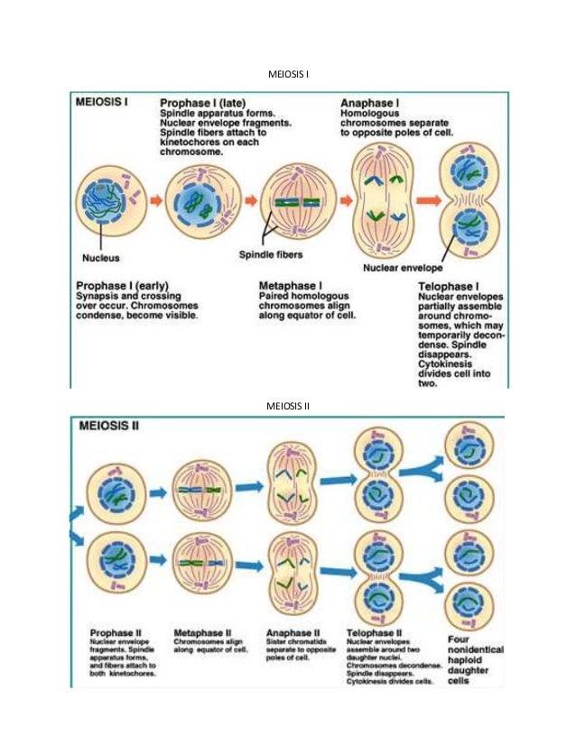 download studien zur laryngaltheorie erganzungshefte zur