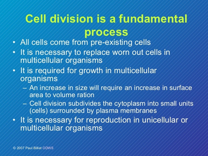 cells lec Lymphatic endothelial cells (lecs) of the lymphatic capillaries form a barrier for  intravasating leukocytes and tumor cells den- dritic cells (dcs).