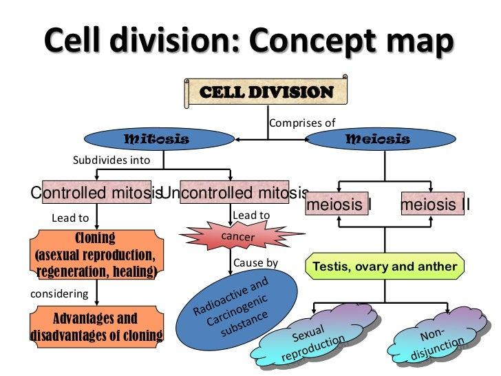Asexual reproduction type of cell division
