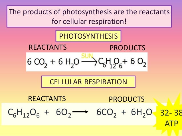 respiration cellular cell reactants energy equation photosynthesis