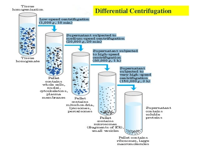 What is fractionation technique
