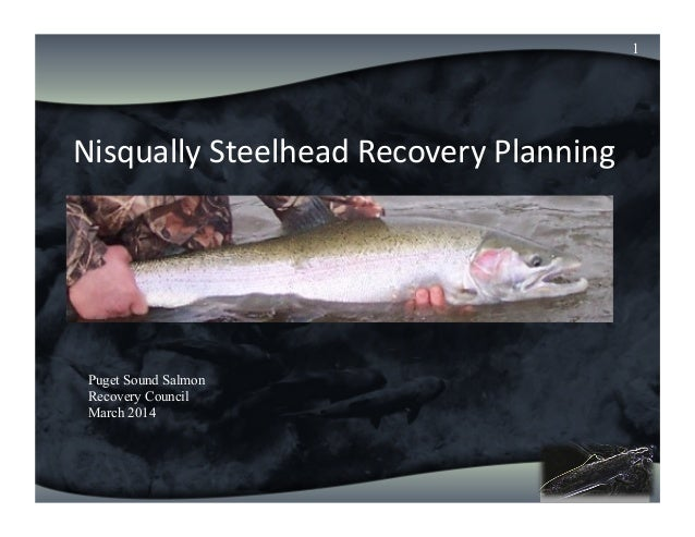 Nisqually  Chinook   Annual  Review   Nisqually  Steelhead  Recovery  Planning   1 Puget Sound Salmon Reco...