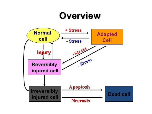 Overview                 + Stress Normal                             Adapted   cell          - Stress             Cell    ...