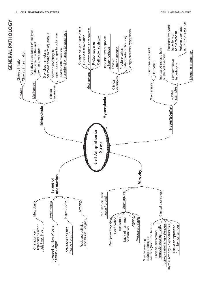 Cell injury pathology mind map