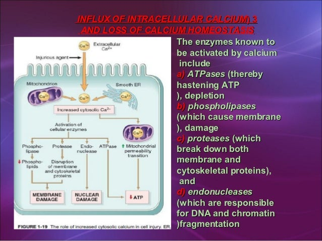 What are nucleic acids responsible for