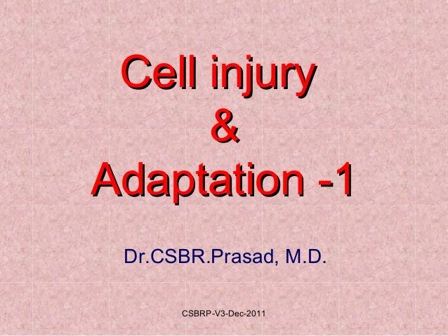 Cell injuryCell injury && Adaptation -1Adaptation -1 Dr.CSBR.Prasad, M.D. CSBRP-V3-Dec-2011