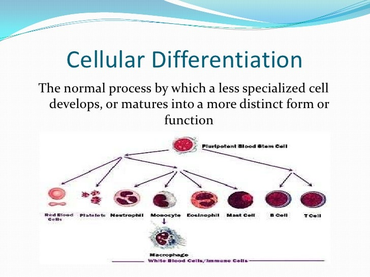cell specialization definition
