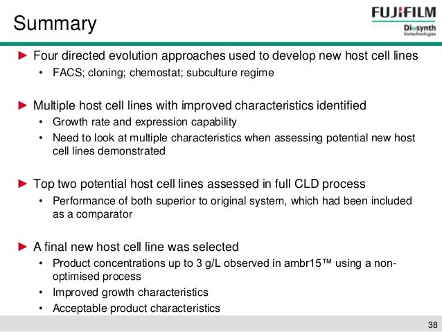 An overview of the process of characterization of the embryonic cell line