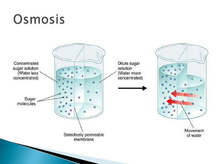 an experiment to understand the process of osmosis and diffusion Osmosis is a special kind of diffusion that only involves water moving through a selectively permeable membrane during osmosis sometimes the process of osmosis depends on the difference in the concentration of cells.