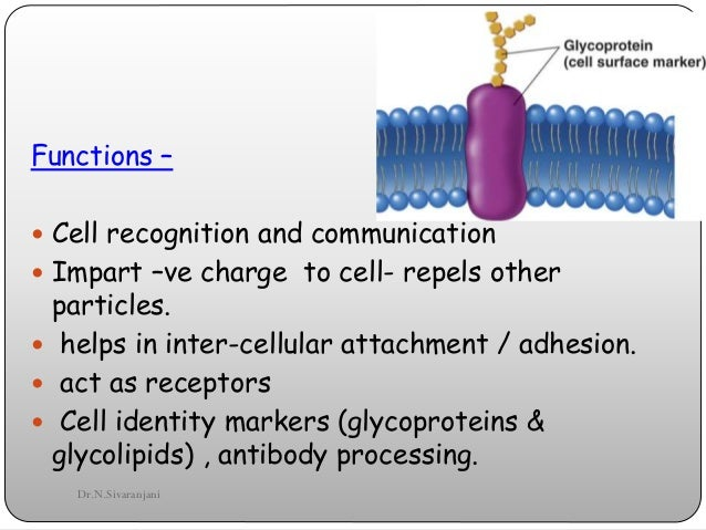 cell structure and memebrane It is externally bounded by cell membrane or plasma membrane  structure of plant cell (explained with diagram) article shared by advertisements.