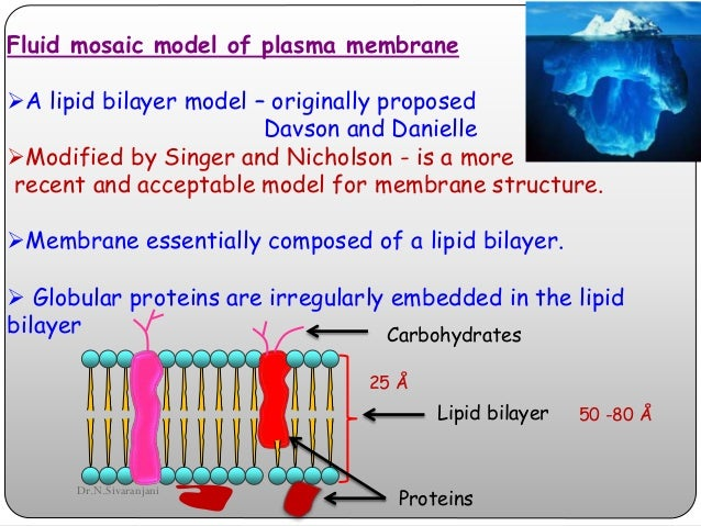 Cell membrane ccuart Image collections
