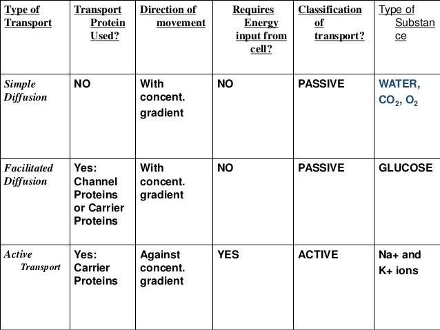 transport in cells worksheet