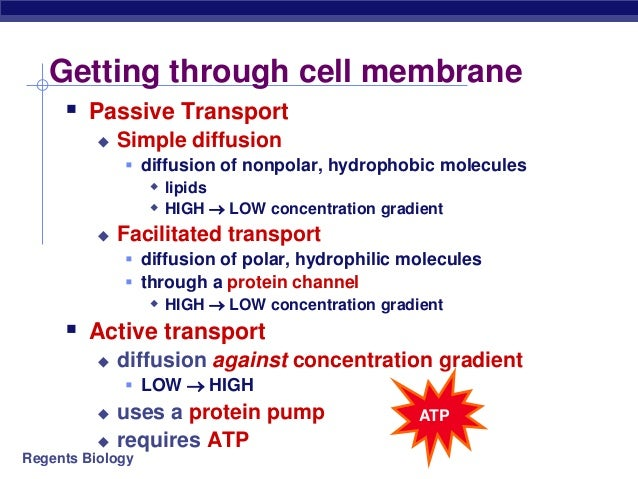 trnasport through the cell membrane Cell - transport across the membrane: the chemical structure of the cell membrane makes it remarkably flexible, the ideal boundary for rapidly growing and dividing cells yet the membrane is also a formidable barrier, allowing some dissolved substances, or solutes, to pass while blocking others lipid-soluble molecules and some small molecules can permeate the membrane, but the lipid bilayer.