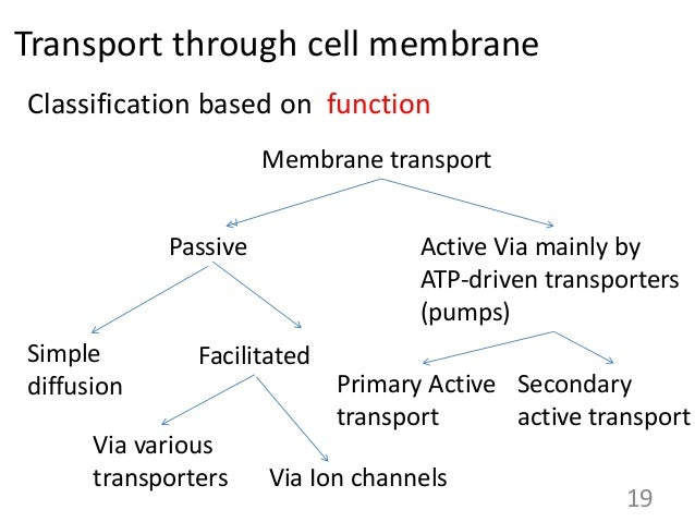 cell membranes and transport In cellular biology, membrane transport refers to the collection of mechanisms that regulate the passage of solutes such as ions and small molecules through biological membranes,  it is postulated that there is a group of specific transport proteins for each cell type and for every specific physiological stage [1.