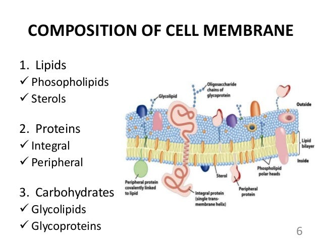 types of membrane transport pdf