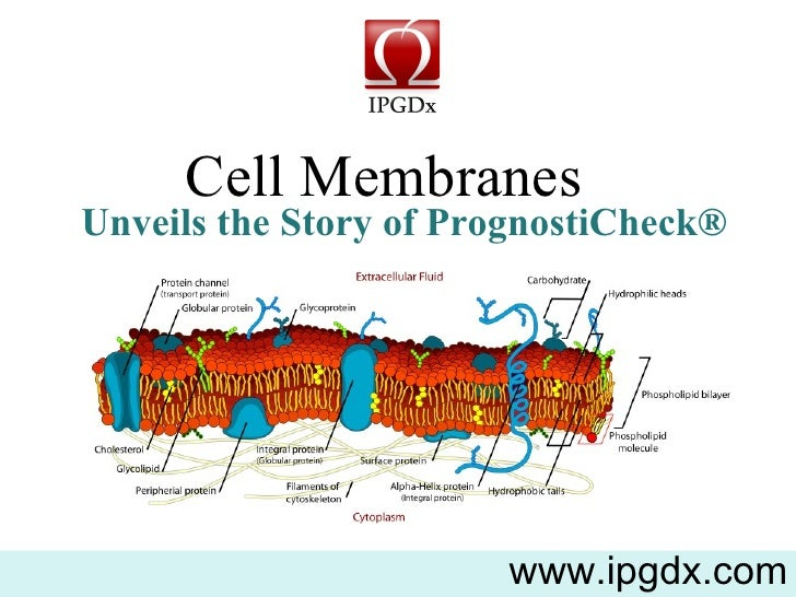 Cell Membranes  www.ipgdx.com Unveils the Story of PrognostiCheck®