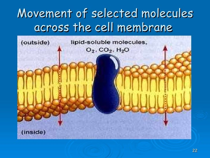 cell membrane coursework Hank describes how cells regulate their contents and communicate with one another via mechanisms within the cell membrane crash course biology is now availa.