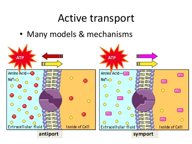 plasma and membrane transport Free essay: the transport of substances across the plasma membrane the plasma membrane or, the cell surface membrane, is made almost entirely of protein.
