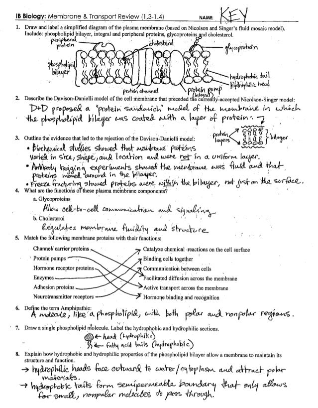 Cell Membrane & Transport Review Key (1.3-1.4)