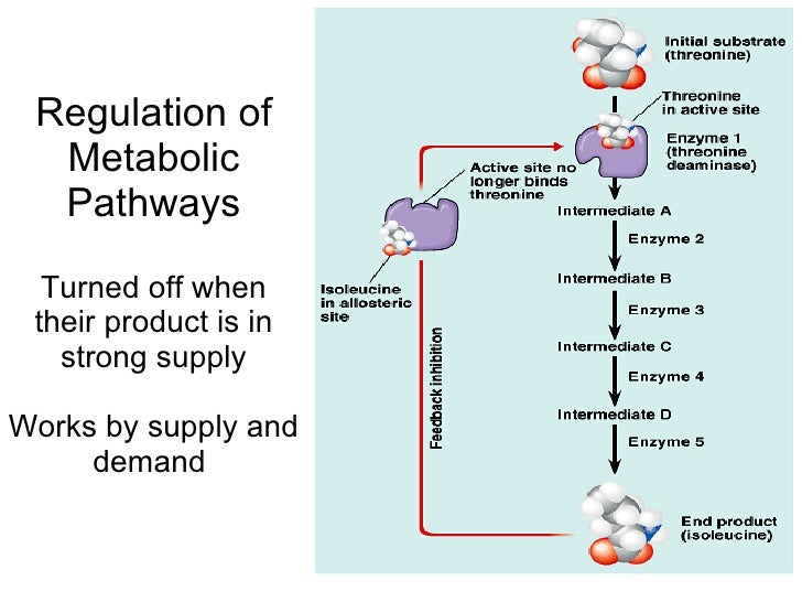cell metabolism diagram of a carbohydrate diagram of a carbohydrate diagram of a carbohydrate diagram of a carbohydrate
