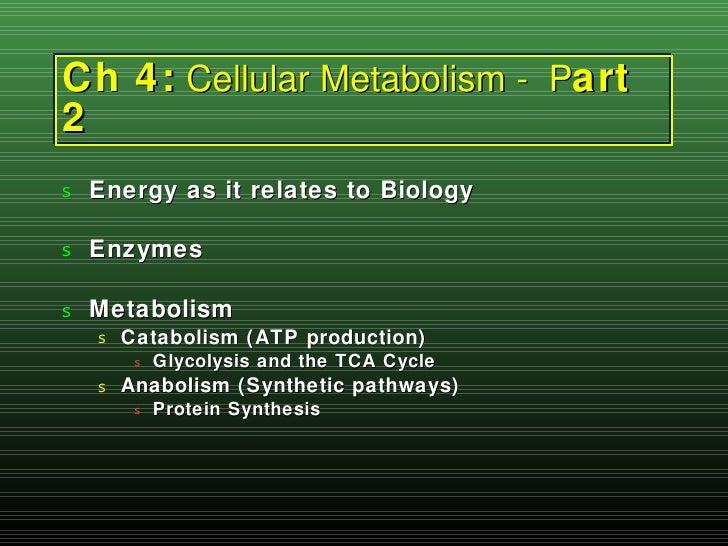 Ch 4:  Cellular Metabolism -  P art 2 <ul><li>Energy as it relates to Biology </li></ul><ul><li>Enzymes </li></ul><ul><li>...