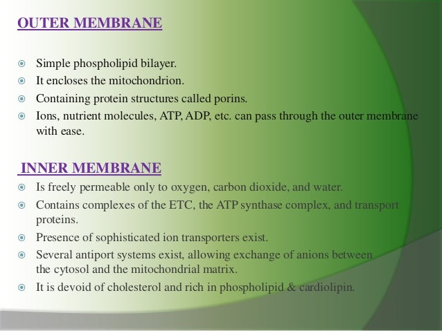 cell mitochondria ppt, Presentation templates