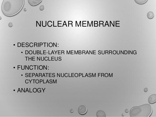 mr  v  wfhs bio cell notes
