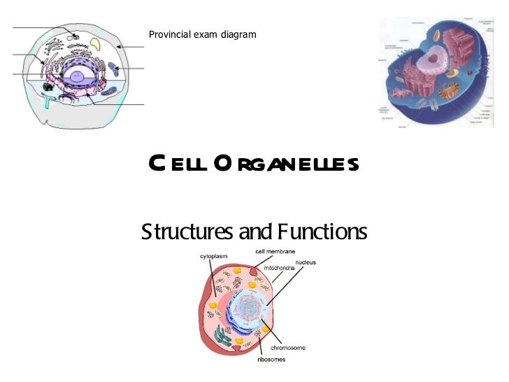 Cell Organelles Structures and Functions Provincial exam diagram