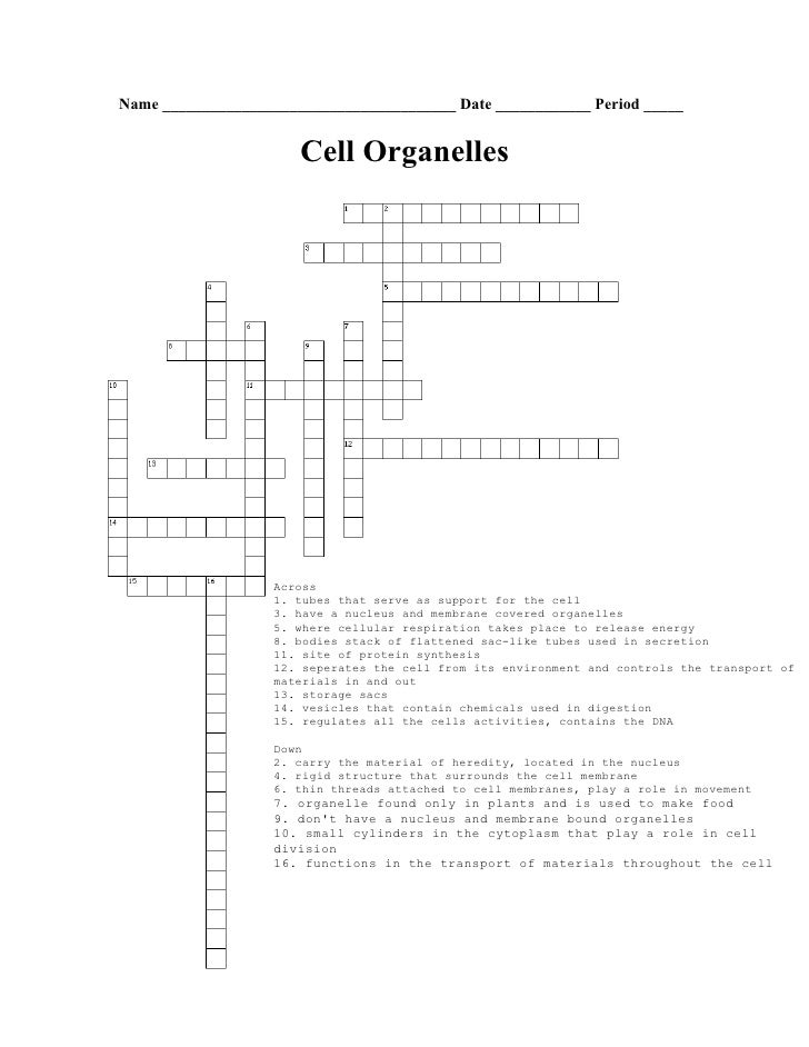 Biology - Cell Organelle Crossword Puzzle