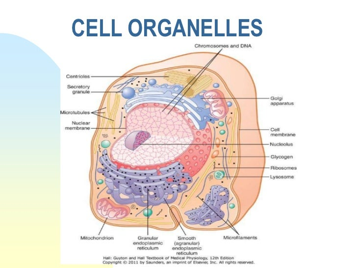 cell structure diagram worksheet