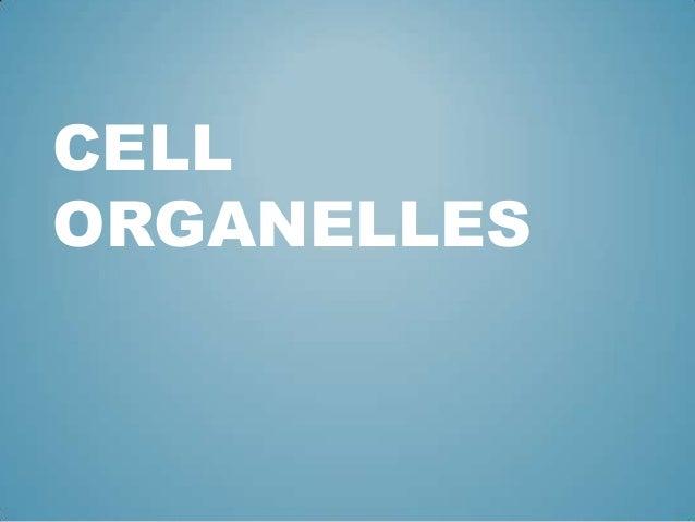 CELLORGANELLES