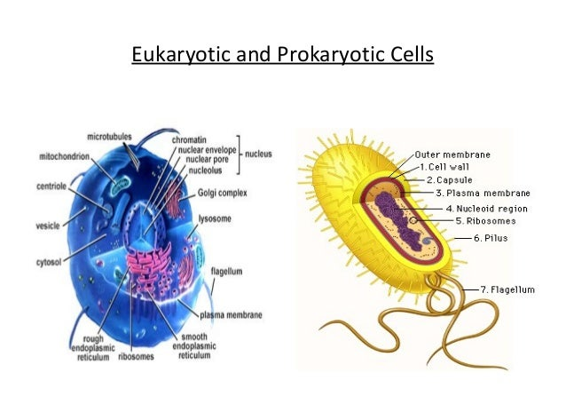Awesome Diagram Of Prokaryotic Cell Organelle Online Wiring Diagram Wiring Digital Resources Bocepslowmaporg