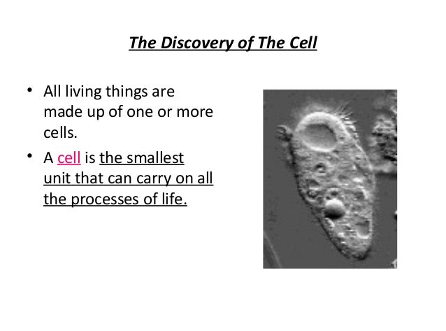 2 4 the anatomy of the cell answers