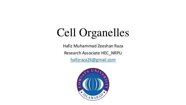 Cell Organelles Hafiz Muhammad Zeeshan Raza Research Associate HEC_NRPU hafizraza26@gmail.com