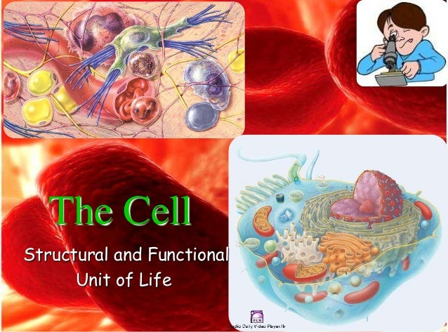 The Cell Structural and Functional Unit of Life