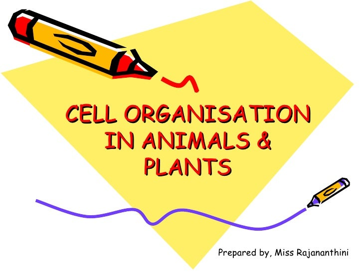 CELL ORGANISATION IN ANIMALS & PLANTS Prepared by, Miss Rajananthini