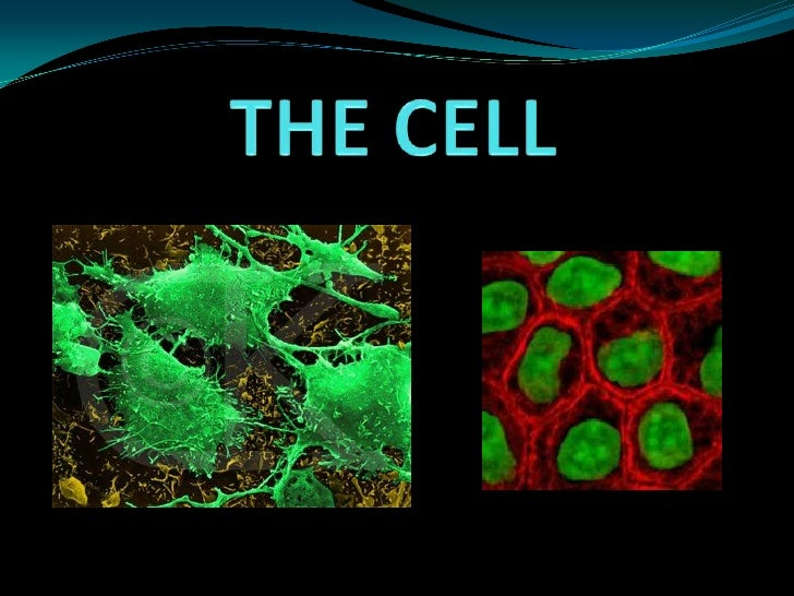THE CELL<br />