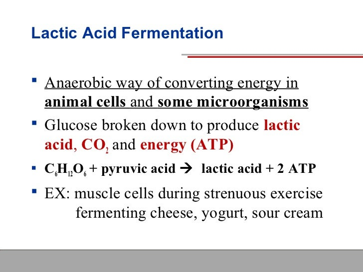 Lactic Acid Fermentation Equation | www.pixshark.com ...